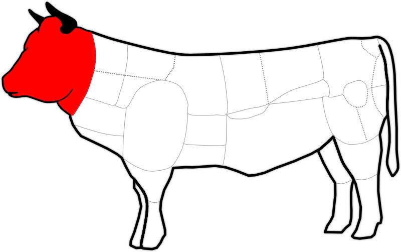 Kopf eines Rindes