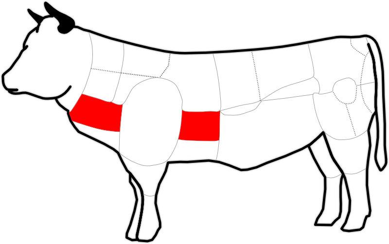 Abbildung der Querrippe eines Rindes