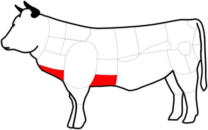 Abbildung einer Rinderbrust